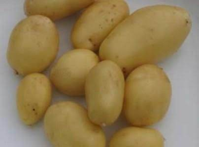 Cathys New Herbed Potatoes
