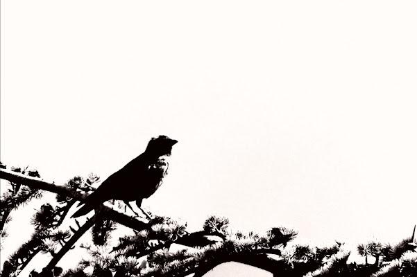 Bird di Alexphoto
