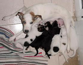 Photo: blanquita and her pups