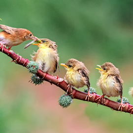 Queue for food ?? by Husada Loy - Animals Other