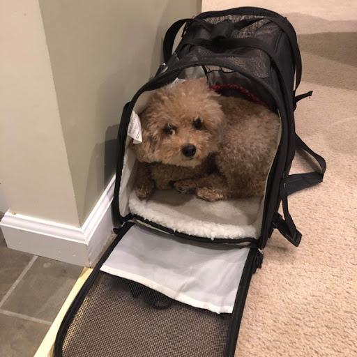 Teddy, MISSING Dec 1, 2019
