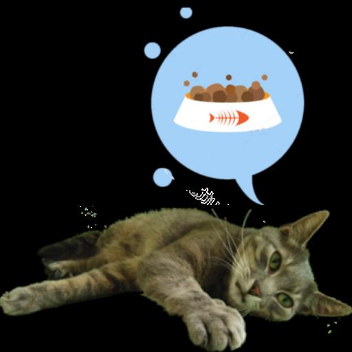 Hartie the cat widget