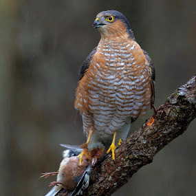 by Michael Pelz - Animals Birds