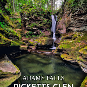 Adams Falls Typography, 2016.09.28 by Aaron Campbell - Typography Captioned Photos ( ±2ev, luzerne county, prime lens, rgsp, waterfall, moss, ricketts glen, lichen, 12mm f2, color efex pro, nature, macphun, state park, evergreen trail, fairmount township, aurora hdr 2017, analog efex pro, e-mount, hdr, pa waterfalls, kitchen creek, nik collection, a6000, pennsylvania, optoutside, mirrorless, ferns, rokinon, ilce-6000, sony, adams falls, wide angle, outdoors, manual focus )