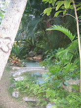 Photo: Yoga Retreat, Bahamas - om pond