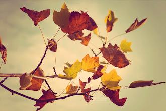 Photo: Vintage Fall