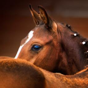 Big Debut by Tara McKenzie - Animals Horses ( #eyes, #babyanimals, #farm, #horse, #dressage, #ranch, #equine )
