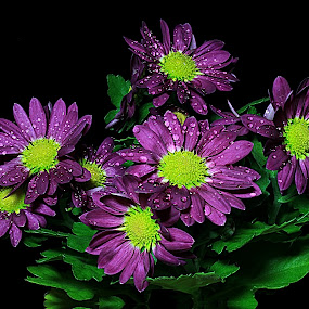 Chrysanthemum by Besnik Hamiti - Nature Up Close Flowers - 2011-2013 ( chrysanthemum, pwcflowergarden-dq )