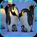 Penguins Video Live Wallpaper icon
