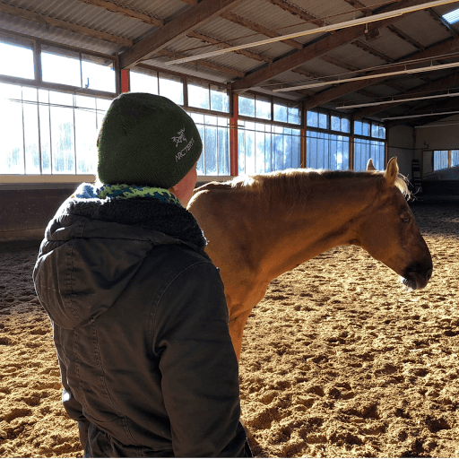 Stress und Burnout mit Pferd