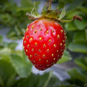 A Strawberry by Rizal Marsa - Food & Drink Fruits & Vegetables (  )