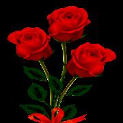 Modern Roses Photo Frames
