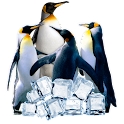 Arctic Penguin Live Wallpaper icon