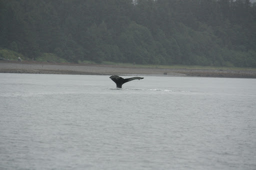 IMG_1568 - Whale watching