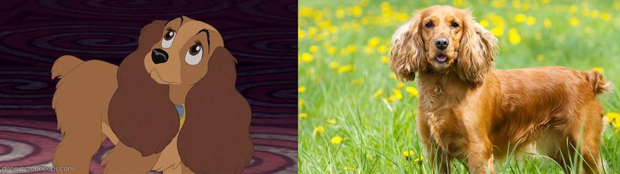 Lady is Cocker Spaniel.