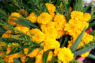 Photo: Day 330 - Marigold Tributes for Buddha