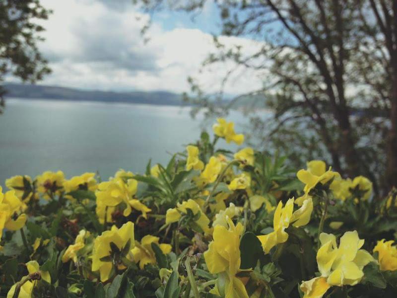 Il giallo sul lago di Simone La Mantia