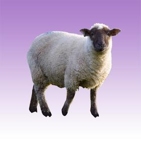 Звуки овцы