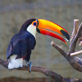 My Bird by Irfan Maulana - Animals Birds