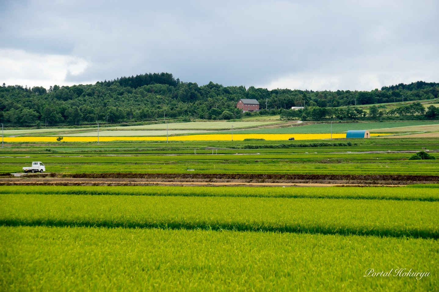緑の田んぼと黄色のひまわり畑