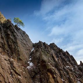 Pine on the Summit by John Shelton - Landscapes Mountains & Hills ( mountains, lone tree, tree, colorado, landscape, rocks, big thompson canyon,  )