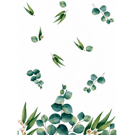 Duk Eucalyptus