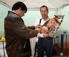 """Photo: A Pupy era a última cadela das que foram da minha saudosa mãe (falecida em 2007) e que ainda estava viva. Todos os cachorros da Dona Clory (que não eram poucos) já morreram, e dela agora restou conosco apenas um gato: o Jacó. A foto é da vacinação da cadelinha em 2011. Descansou. """"Tu, Senhor, manténs acesa a minha lâmpada; o meu Deus transforma em luz as minhas trevas."""" Salmos 18:28 https://www.bibliaonline.com.br/nvi/sl/18/28"""