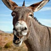 Donkey Sounds APK
