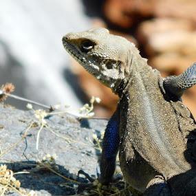 Attitude by Sudhindu bikash Mandal - Animals Reptiles