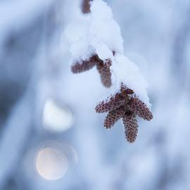 by Anngunn Dårflot - Nature Up Close Other Natural Objects