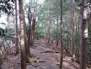 木の根の多い道を進む