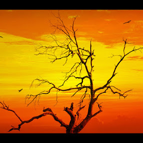 The Malakwal Tree by Sami Ur Rahman - Nature Up Close Trees & Bushes ( withering branches, peaceful, birds, dead tree, evening sky )