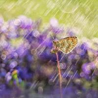 Rain colors di