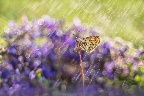 Rain colors di Donatella Maritan