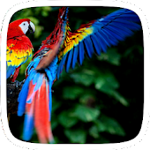 Colorful Parrot Theme