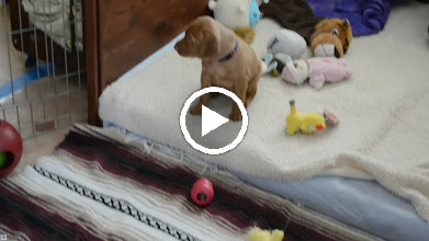 Video: 1st vacuuming