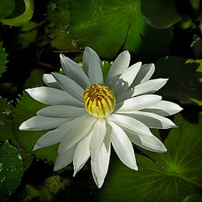 the fan by Mirela Korolija - Nature Up Close Flowers - 2011-2013