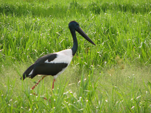 Darwin to Kakadu National Park Australia // Jabiru by the Yellow River