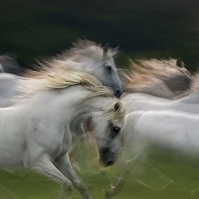In group by Milan Malovrh - Animals Horses ( pwc muving animals,  )