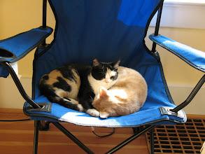 Photo: Snuggly kitties in the sunshine.