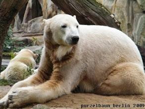 Photo: Knut betrachtet die Besucher - Gianna die Nachbarn ;-)