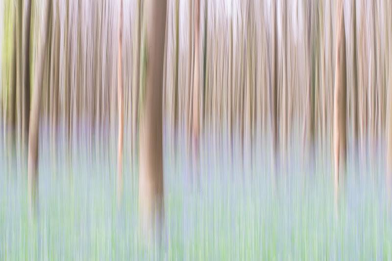 ICM nella foresta di Hallerbos di marco_croci