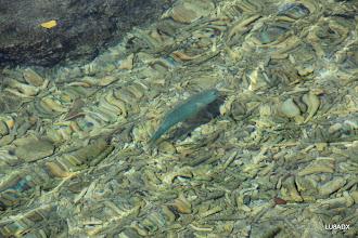 Photo: Peses de colores sobre la costa