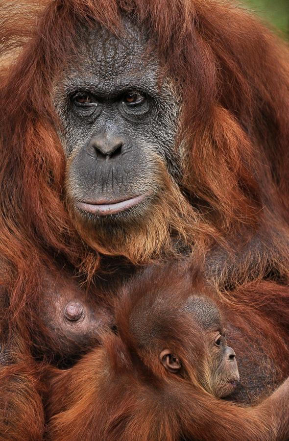 by Bimo Gupono - Animals Other Mammals