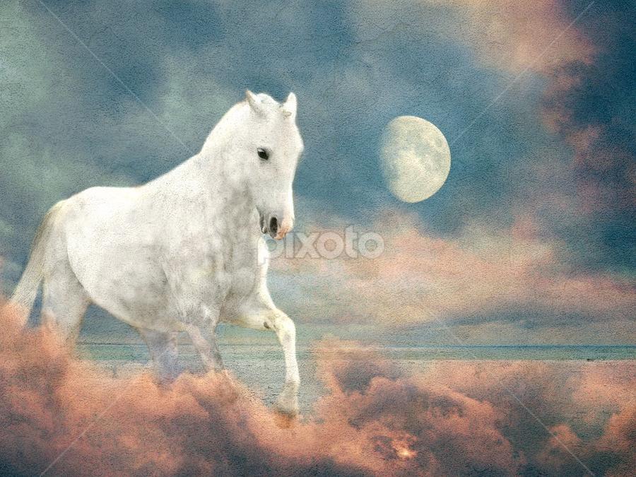Pegasus by Bjørn Borge-Lunde - Digital Art Abstract