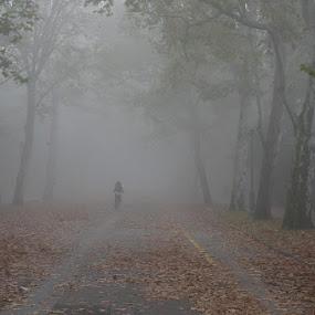 Autumn blues by Sámuel Zalányi - City,  Street & Park  City Parks ( hungary, park, fog, autumn, szeged, city,  )