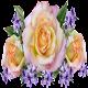 [오늘의꽃말, 꽃말운세]꽃말로 보는 오늘의 운세/꽃말/운세/행운/사랑/행복/건강/우정/긍정 Download on Windows