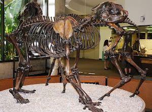 Photo: The short-faced bear may have once been Earth's largest mammalian, terrestrial carnivore. The species is thought to have been larger than any living species of bear.