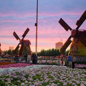 Desert Flowers by Braggart Reigh - City,  Street & Park  City Parks ( city parks, sunset, parks, amusement parks, flowers )