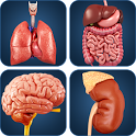 My Organs Anatomy icon